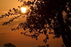 Sunrise on the Savanna