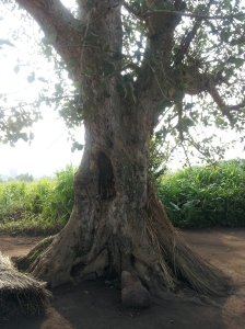 A tree that the LRA placed people before they would shoot them.