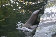 Seal at Milford