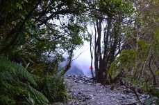 Trail to Fox Glacier