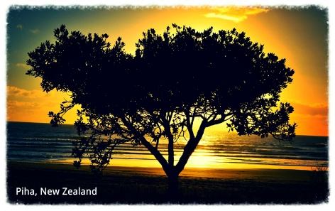 Click the link above to see all of my New Zealand pics!